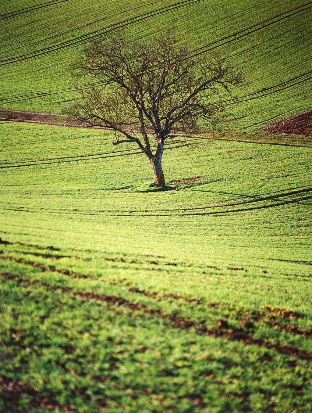 Cimes et racines